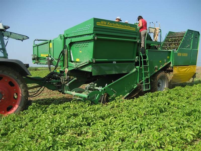 Картофель как вырастить хороший урожай  Cельхозпортал