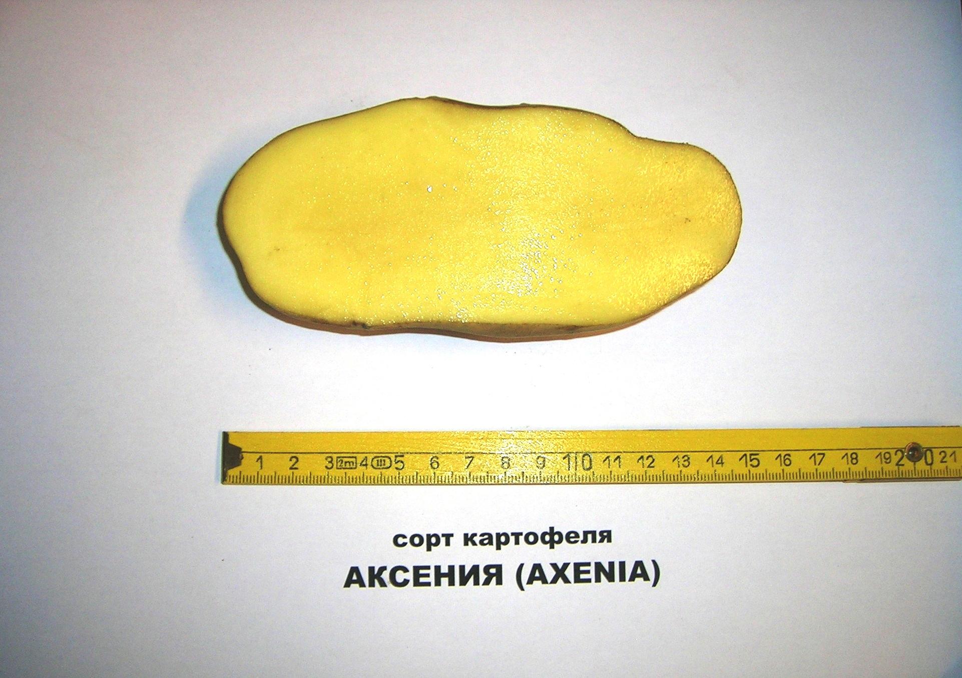 Axenia 1
